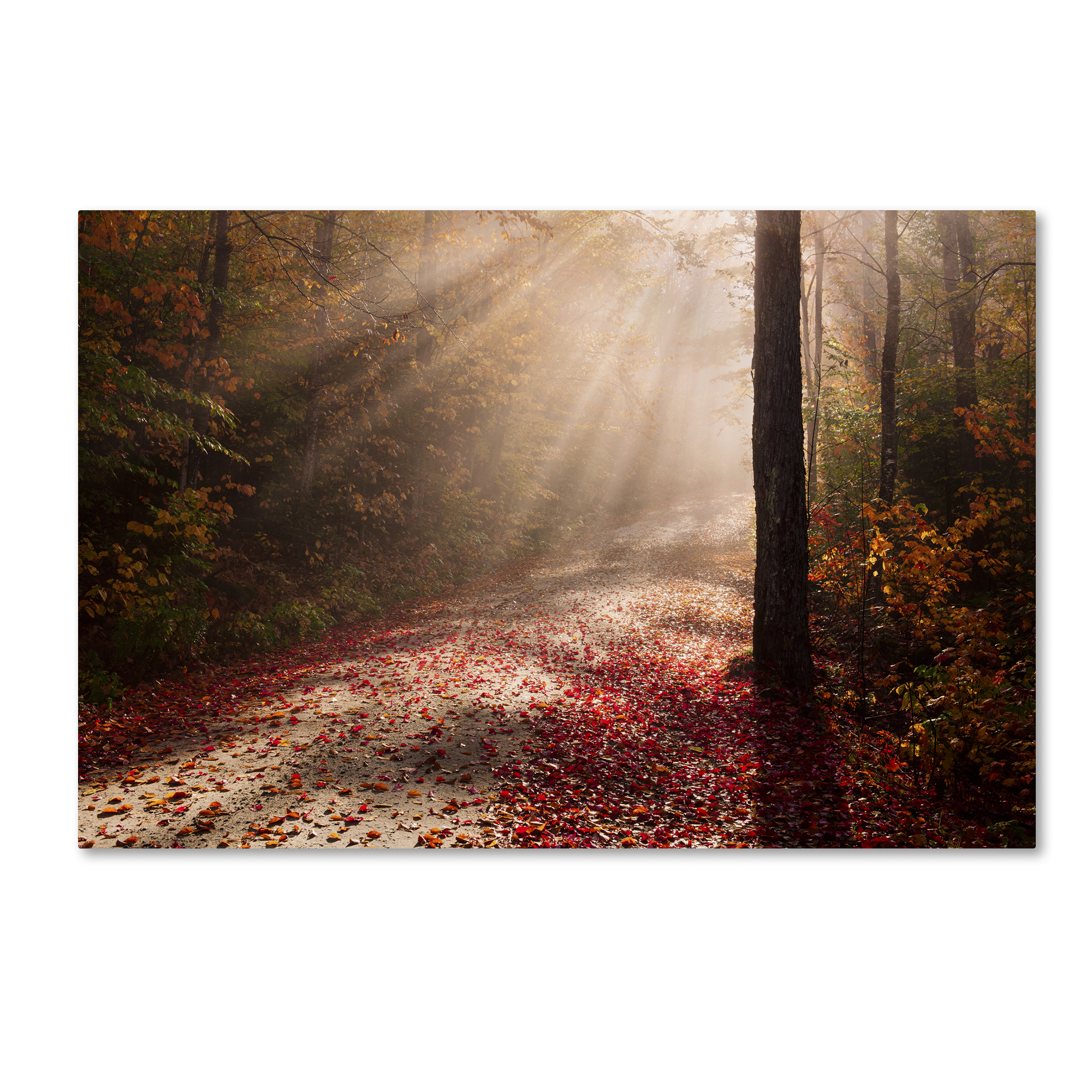 Michael Blanchette Photography 'Light in the Forest' Canvas Art 16 x 24