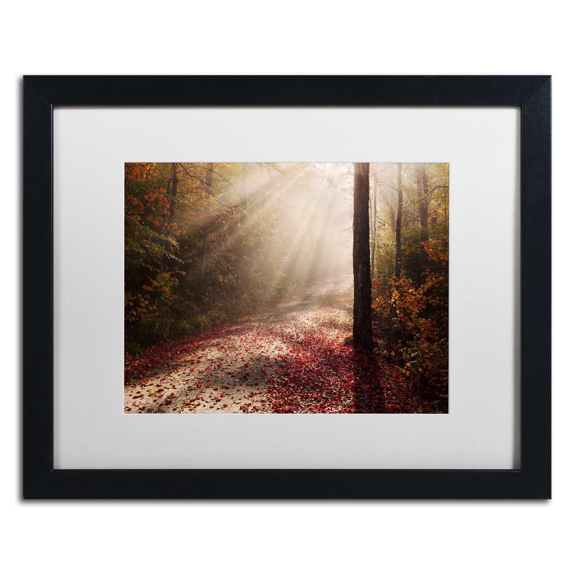 Michael Blanchette Photography 'Light in the Forest' Black Wooden Framed Art 18 x 22 Inches