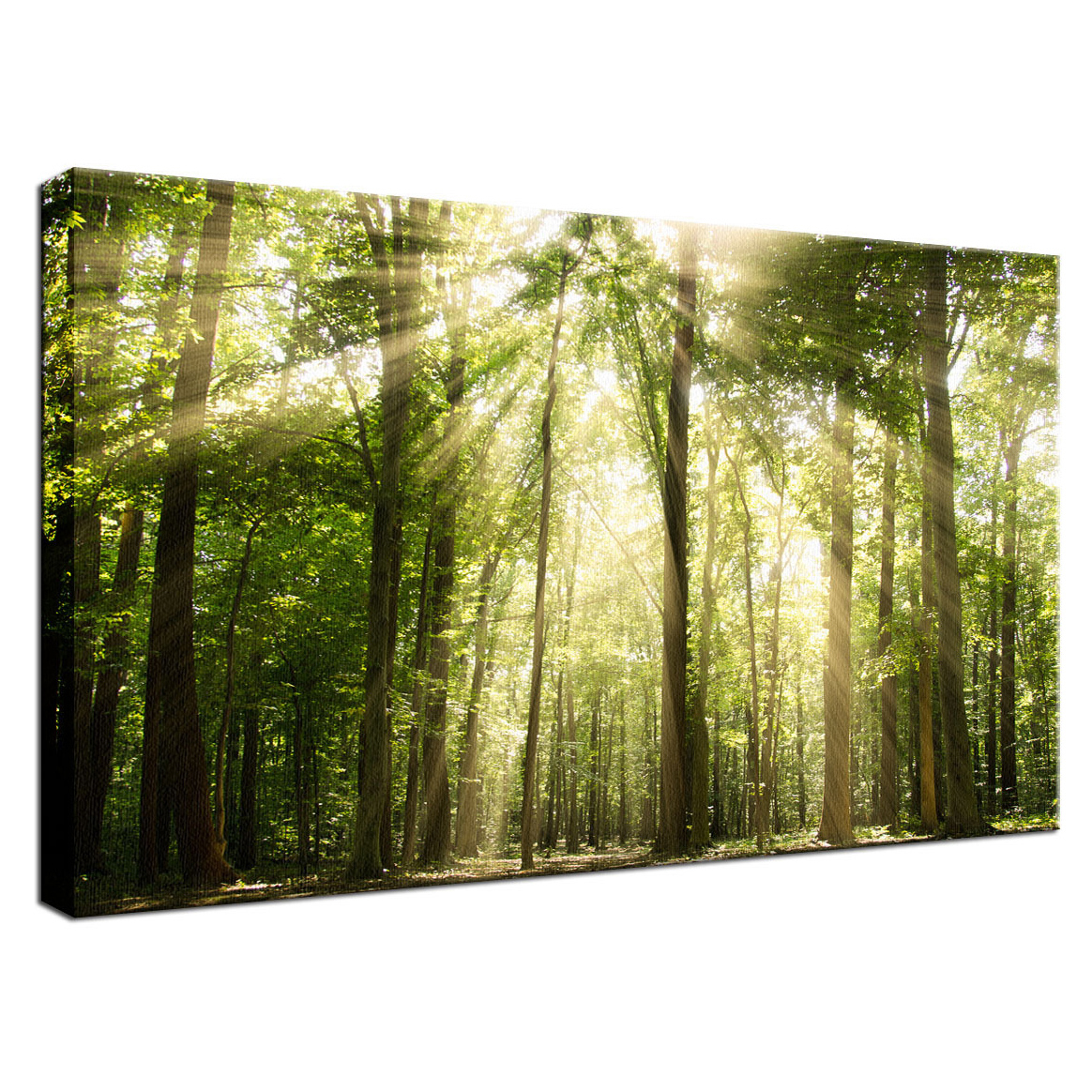 "Sun Rays Through Tree Tops Rural Landscape Photography Fine Art Stretched Canvas Photo Print Collectible Wall Art - 11"" x 14 5a454353e2246143f1530ae4"