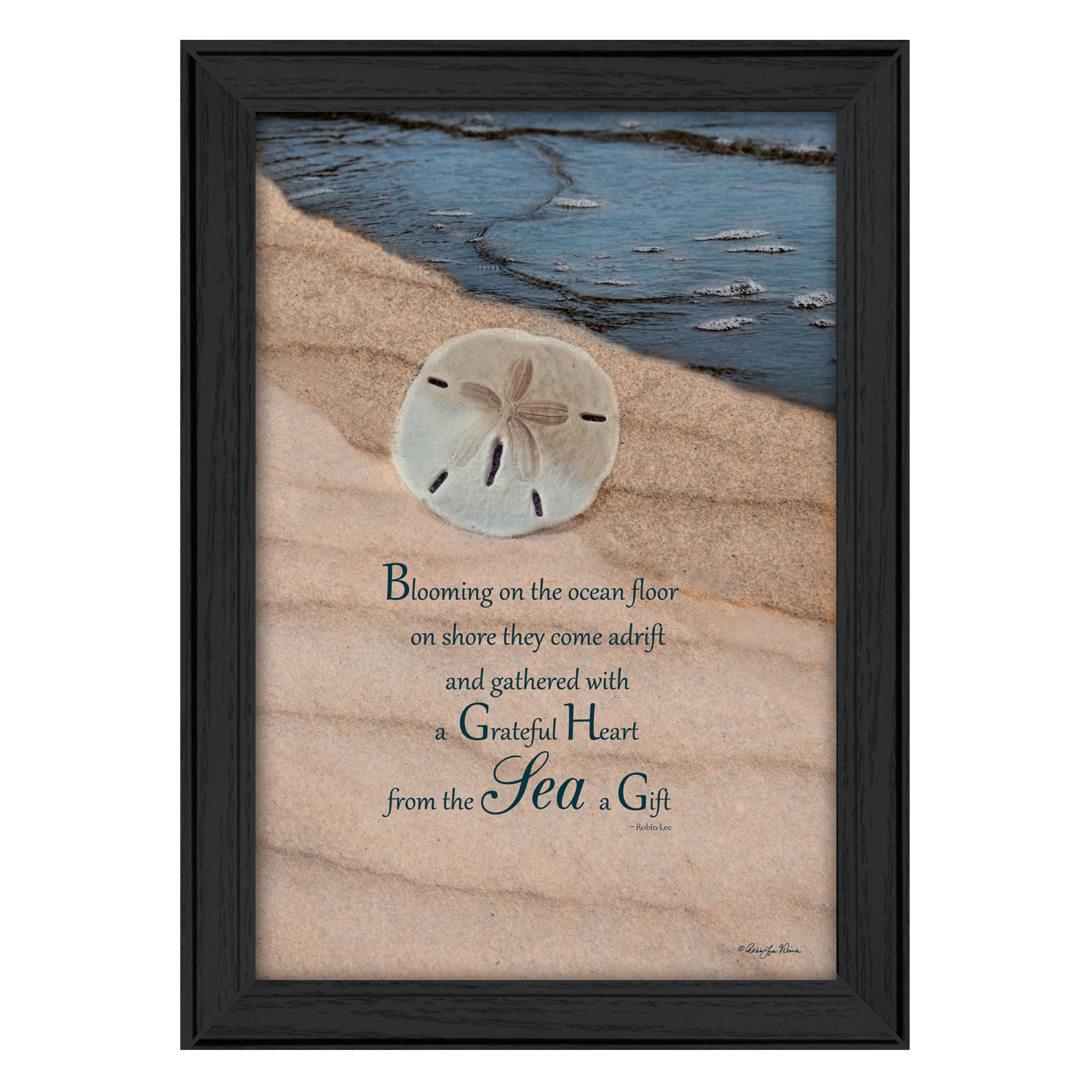 "Rlv423-405, ""A Gift"" is a 15""x 21"" framed art print by Robin Vieira. This print is a framed in a decorative black frame. A Gift from the beach???Sand Dollar. To view a matching vignette of this print search: V321-405. The print has a protective, archival finish (glass is not needed) and arrives ready to hang. Made in the USA with pride by skilled American workers * Made in the USA * Women Owned (Wbe) * Textured Artwork with a 'rolled on' acid free acrylic coating to create a canvas painting effect. No glass is necessary. * UV protectant coating protects artwork from fading. * Arrives Ready to Hang"