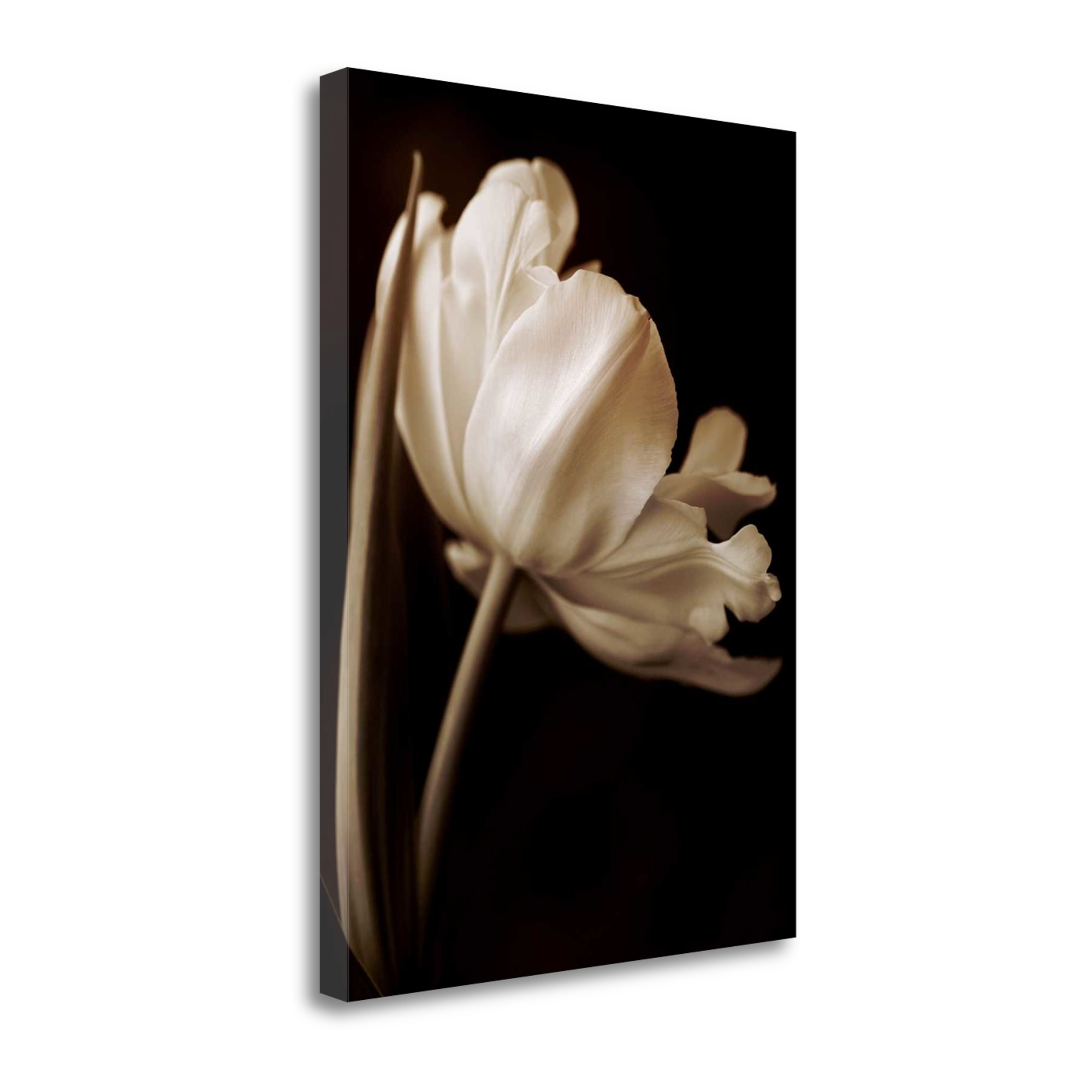 "Champagne Tulip I By Charles Britt, 18"" x 24\"" Fine Art Giclee Print on Gallery Wrap Canvas, Ready to Hang"